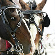 Carriage Horse - 4 Poster