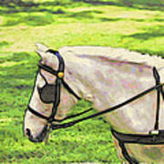 Carriage Pony Poster