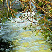 Cascade Cedar Poster