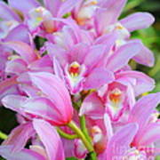 Cascade Of Pink Orchids Poster