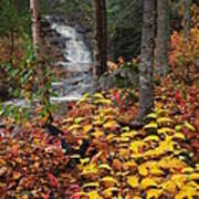Cascade Creek  Autumn Poster