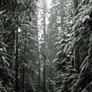Cascade Snow Poster