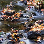 Cascading Autumn Leaves On The Miners River Poster