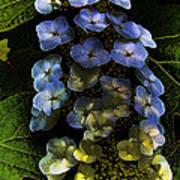Cascading Flower Poster