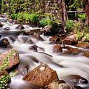Cascading Rocky Mountain Forest Creek Poster