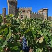 Ripe On The Vine Castelle Di Amorosa Poster