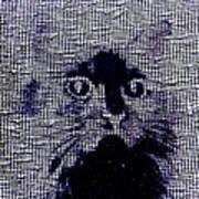 Cat 2 Poster