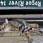 Cat And A Canoe Poster
