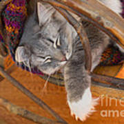Cat Asleep In A Wooden Rocking Chair Poster