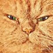 Cat Face Close Up Portrait. Painted Effect Poster
