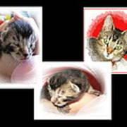 Cat Family Poster