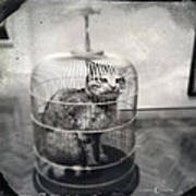 Cat In Cage Poster