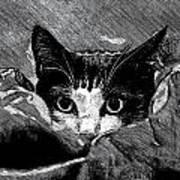 Cat In Hiding Poster