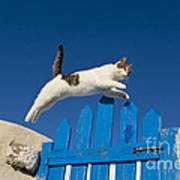 Cat Jumping A Gate Poster