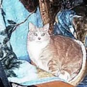 Cat Motif Poster