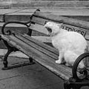 Cat On A Bench Poster