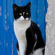 Cat On A Greek Island Poster