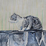 Cat On A Stone Wall Poster
