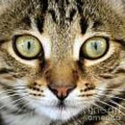 Cat Portrait Macro Shot Poster
