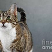 Cat Portrait Poster