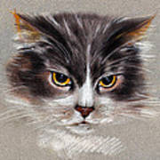 Cat Portrait Yellow Eyes Poster