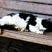 Cat Sleeping On Bench Poster