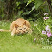 Cat Watching Prey Poster