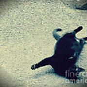 Cat Yoga Poster