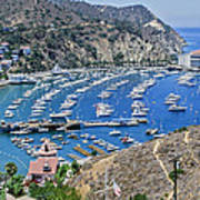 Catalina Harbor Poster