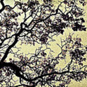 Catalpa Tree Gold Poster