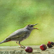 Catbird Eating Cherries Poster