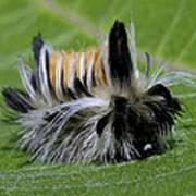 Caterpillar 22 Poster