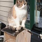Catfeeder Poster