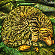 Catnappin' On A Cold Rainy Sunday Poster