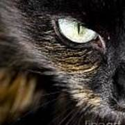 Cats Eye Poster