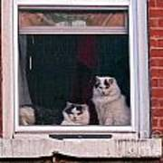 Cats On A Sill Poster