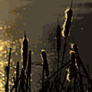 Cattails At Sunset Poster