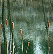 Cattails On Green Poster