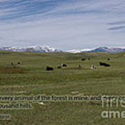 Cattle And Bible Verse Poster