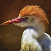 Cattle Egret 2 Poster