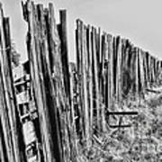 Cattle Fence By Diana Sainz Poster