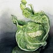Cauliflower In Reflection Poster