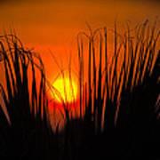 Cayo Grande Palm Tree Sunrise Poster