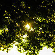 Cedar Filtered Sun Poster