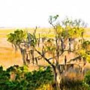Cedar In The Marsh Poster