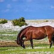 Cedar Island Wild Mustangs 59 Poster