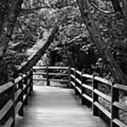 Cedar Pathway Poster