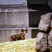 Cemetery Cat Poster
