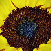 Center Of A Sunflower Poster