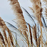 Central Coast Pampas Grass II Poster